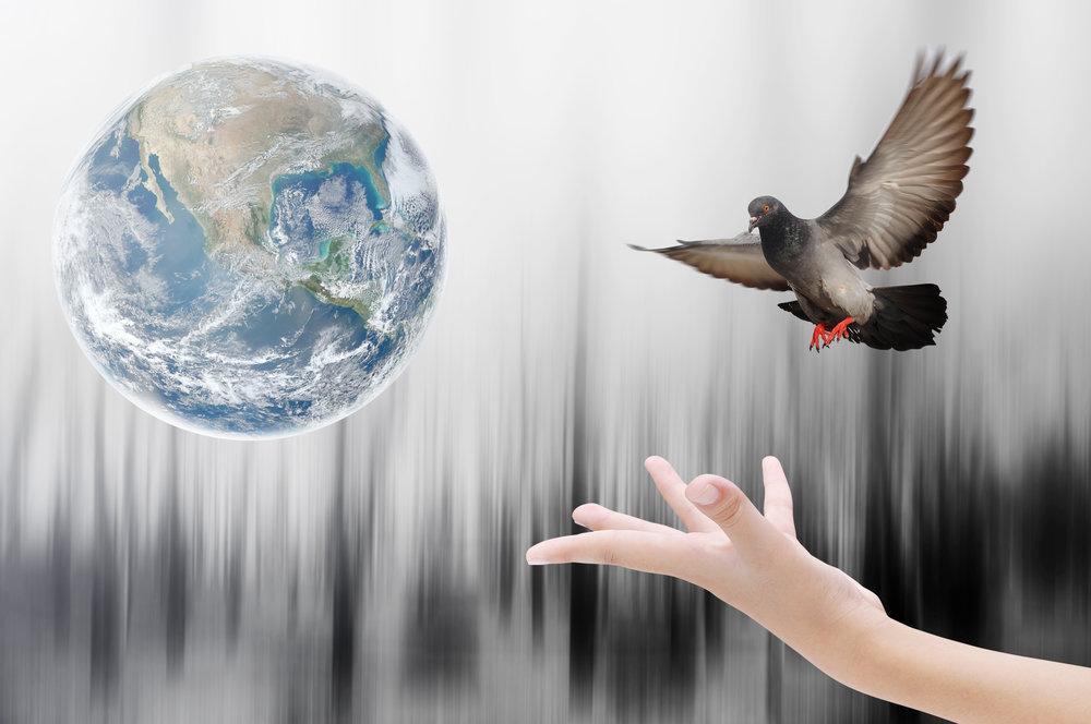 Globe with Bird.jpeg
