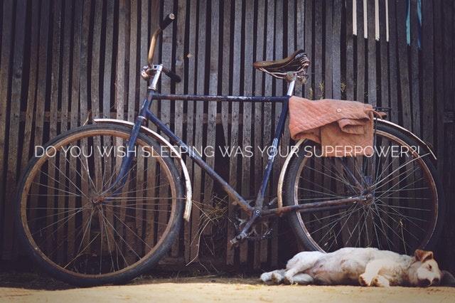 sleeping dog.jpeg