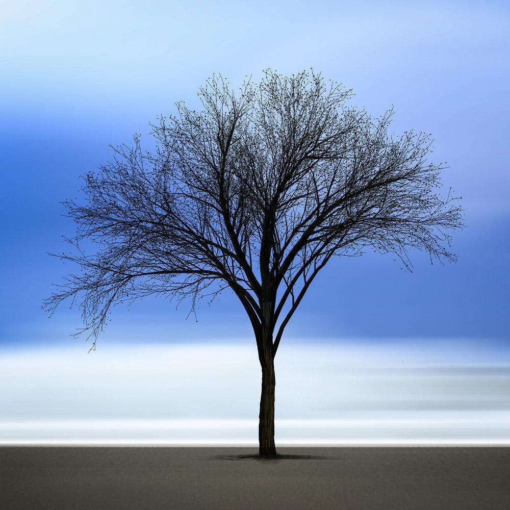 "Black Tree  16""x16"" Edition of 15"