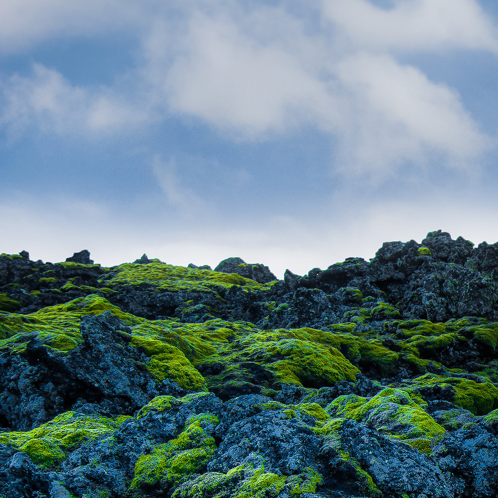 """Moss and Lava , Iceland 16""""x16"""" Open Edition"""