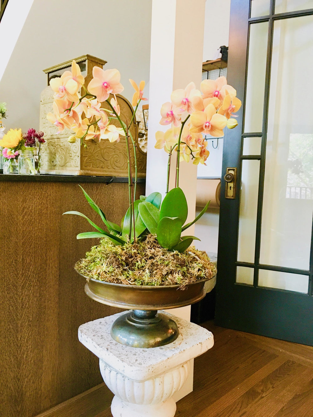 Orchids in Urn.jpg