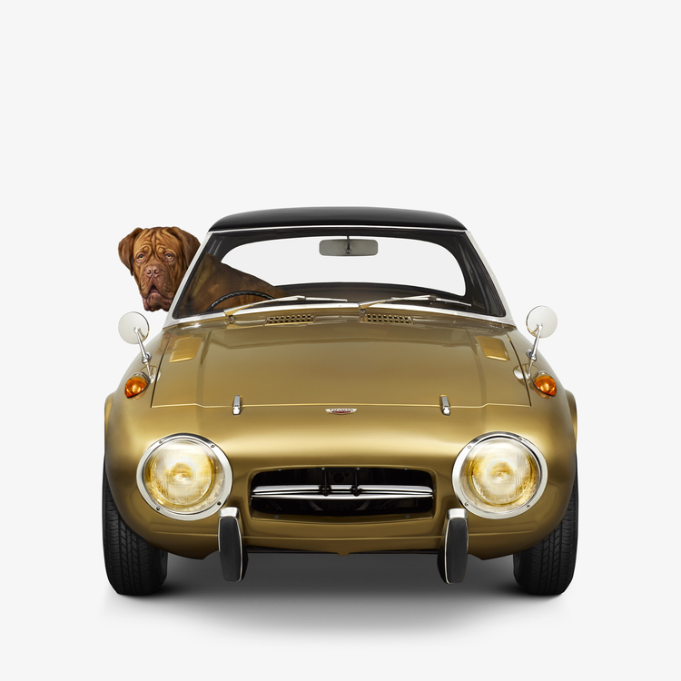 Jenny Risher  Toyota 800 - Dogue De Bordeaux (18 1/4 X 18 1/4)  Silver gelatin limited edition photographic print on paper  Email us for all inquiries: gerard@robertkiddgallery.com