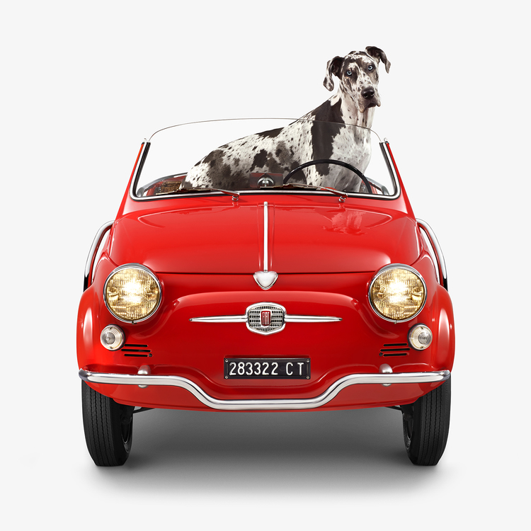 Jenny Risher  Fiat Jolly - Great Dane (18 1/4 X 18 1/4)  Silver gelatin limited edition photographic print on paper  Email us for all inquiries: gerard@robertkiddgallery.com