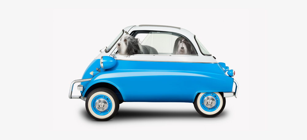 BMW Isetta & Bearded Collie side (12 x 22)