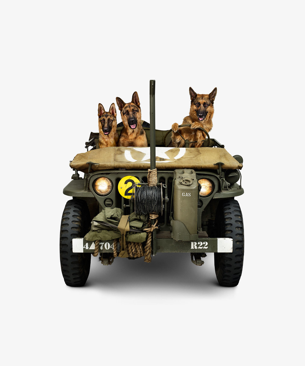 Jeep Willy & German Shepherds (17 x 17)