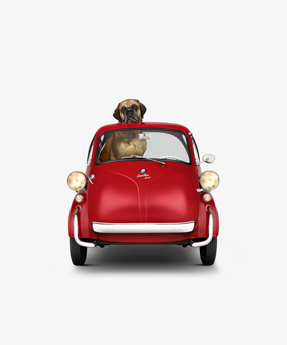 BMW Isetta & English Mastiff (17 x 17)