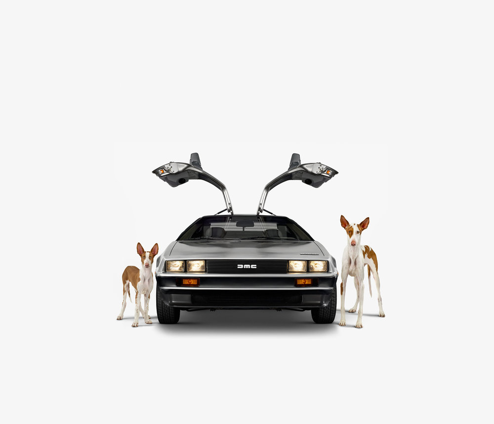 DeLorean & Ibizan Hounds (17 x 17)