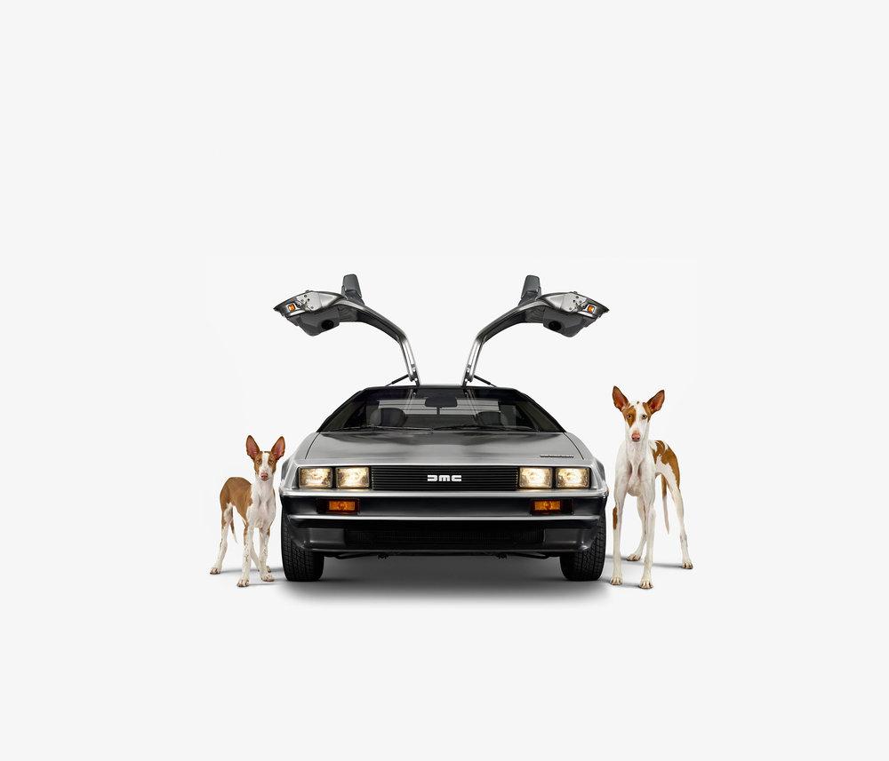 DeLorean & Ibizan Hounds (17 x 17)