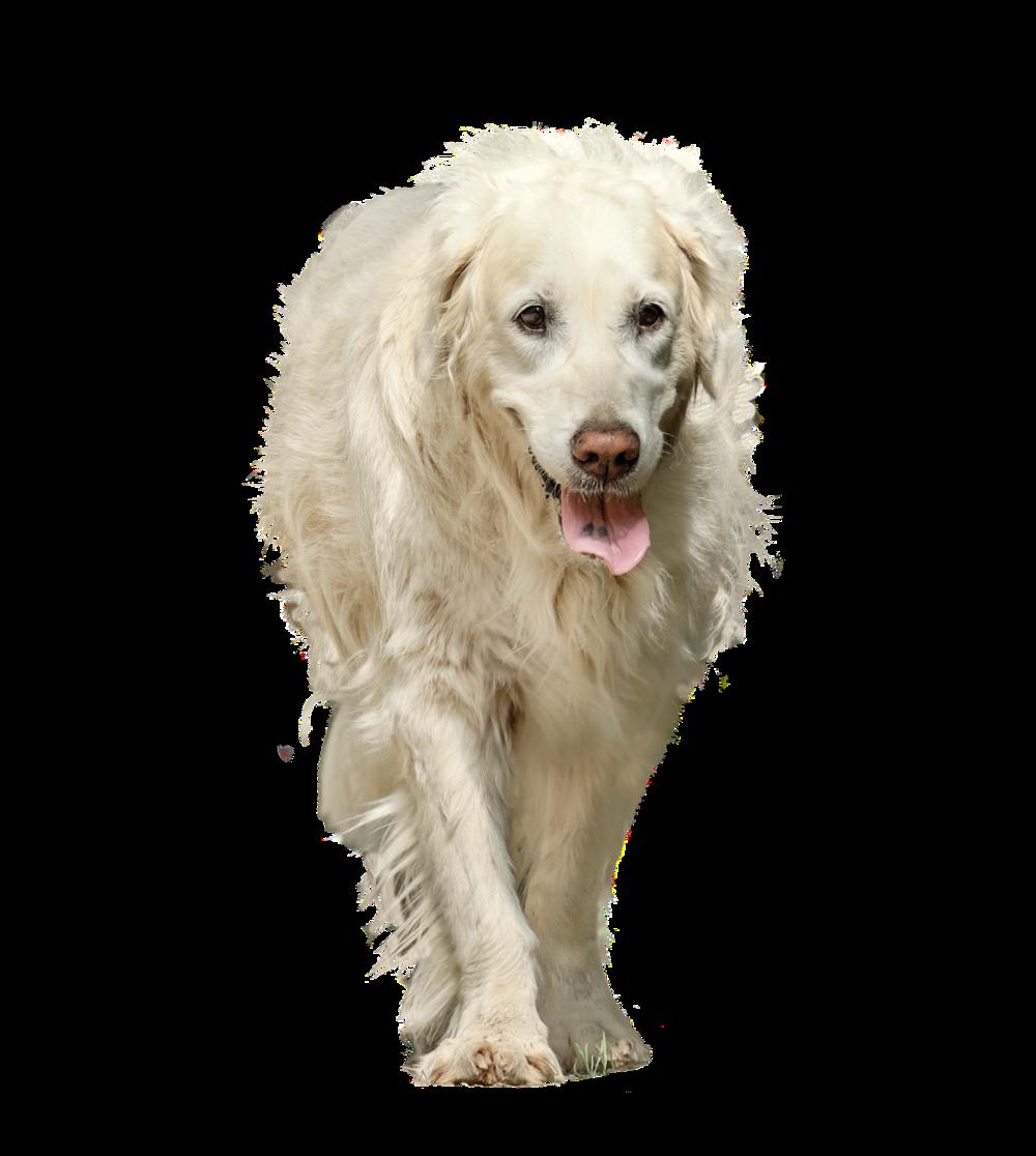 dog-3234281_1920.png