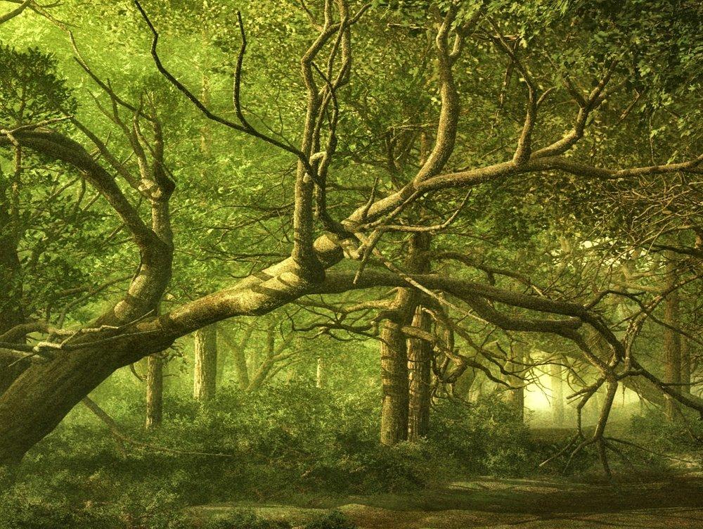 forest-1699079_1920.jpg