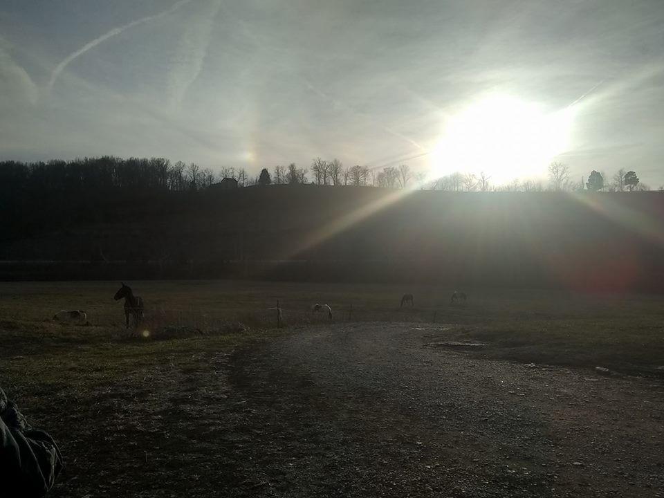Horses and sun.jpg