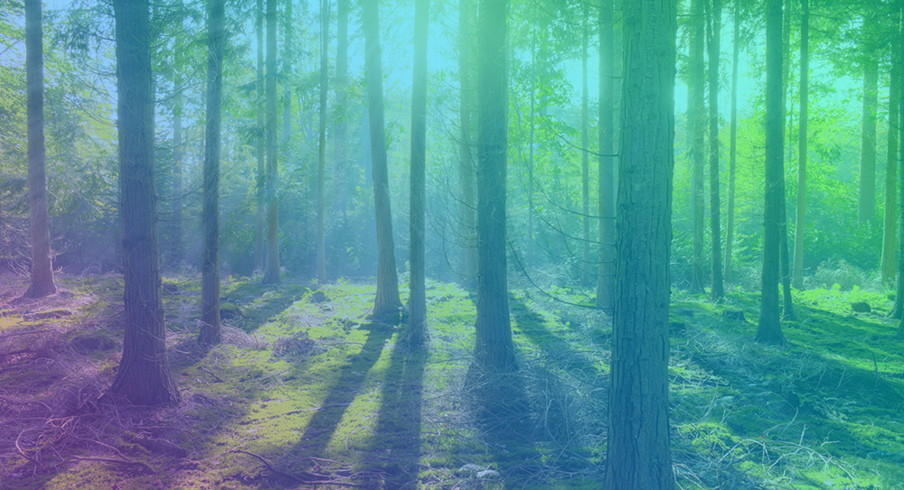 i see trees.png