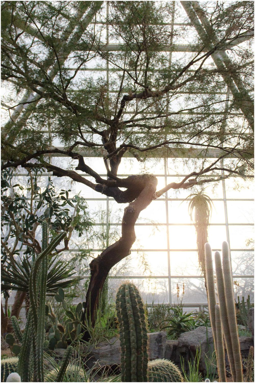 brooklyn-botanic-garden_7.jpg