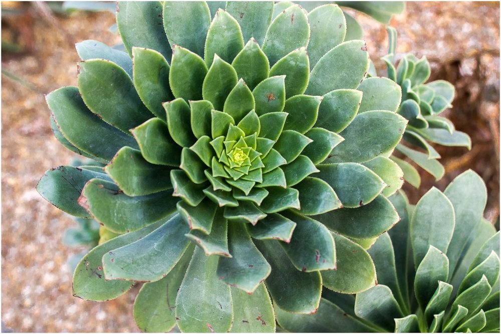brooklyn-botanic-garden_8.jpg