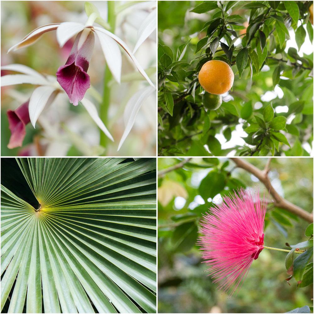 brooklyn-botanic-garden_9.jpg