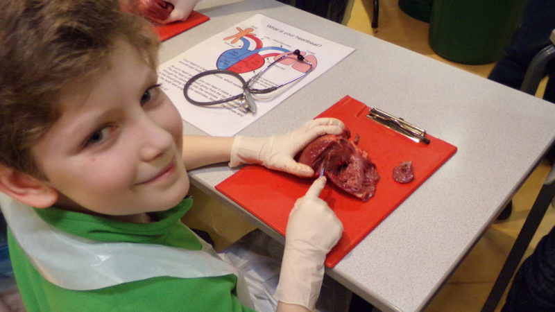 heart-dissection-thackray-medical-museum-january-2016-danny-hirst-800x450.jpg