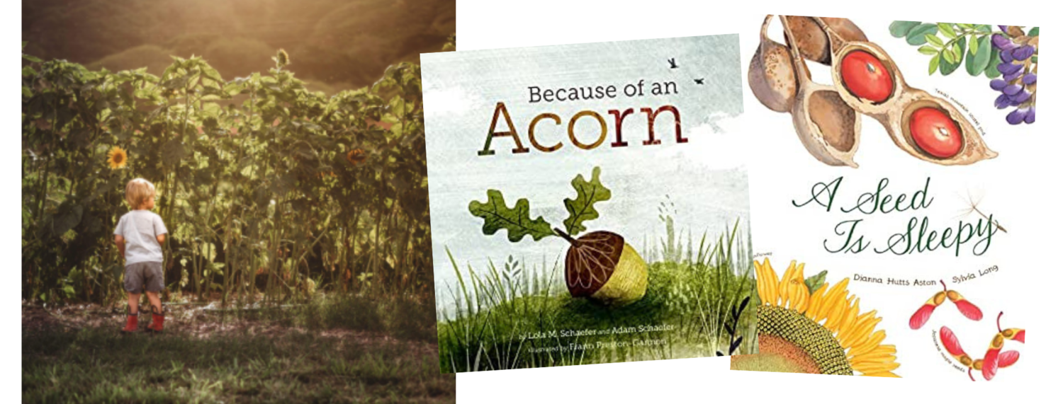 photo courtesy of keikiandplow.com,  Because of an Acorn  written by Lola M. Schaefer & Adam Schaefer, illustrated by Frann Preston-Gannon (Chronicle Books, 2016),  A Seed is Sleepy  written by Dianna Hutts Aston, illustrated by Sylvia Long (Chronicle Books, 2014)