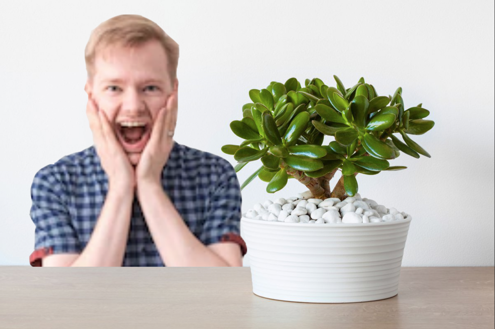 """""""That plant is gorgeous. Like, gorgy gor."""" - A new report undertaken by local Chinese professor, Dr Feng Shui, has revealed that gay men indeed love a plant."""