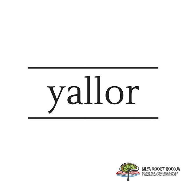.⠀ // Learn Nyoongar Language // ⠀ . ⠀ Yallor - Songs⠀ . ⠀ #BilyaKoortBoodja⠀ #NyoongarCulture⠀ #Environmental⠀ #BKBCentre⠀ #Northam