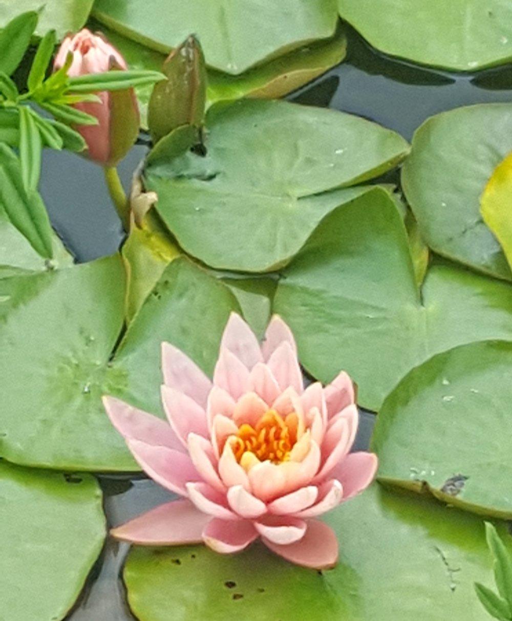 lotus2_ior.jpeg