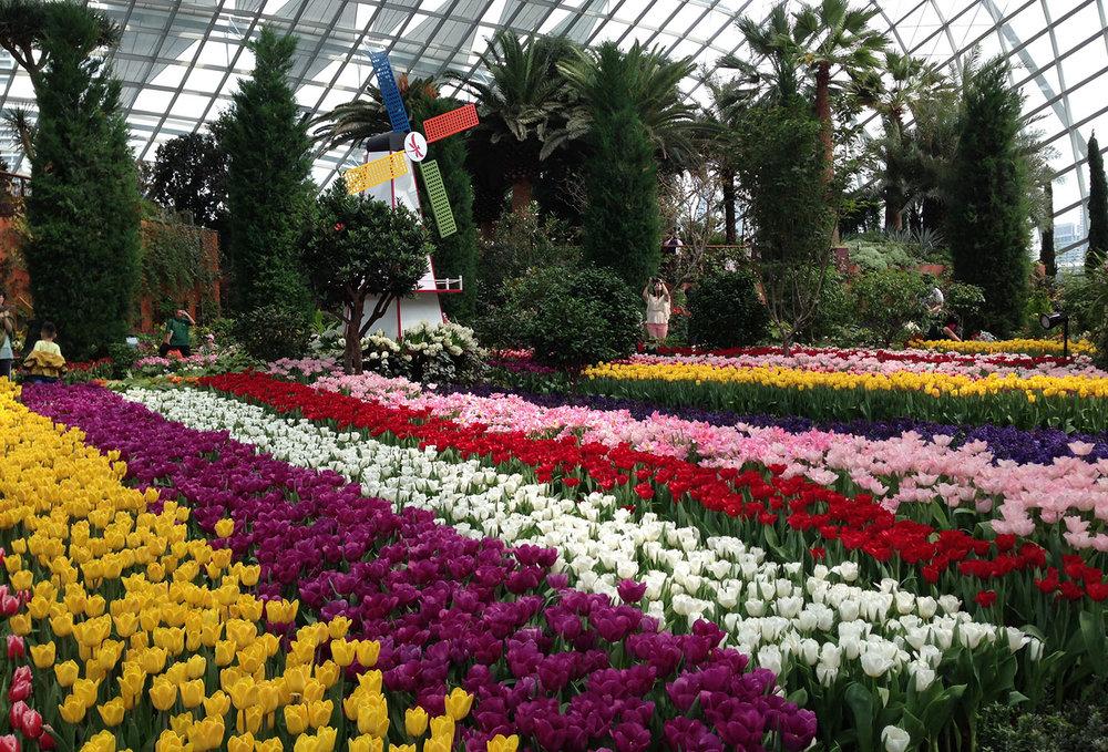 Flower Dome3.jpg