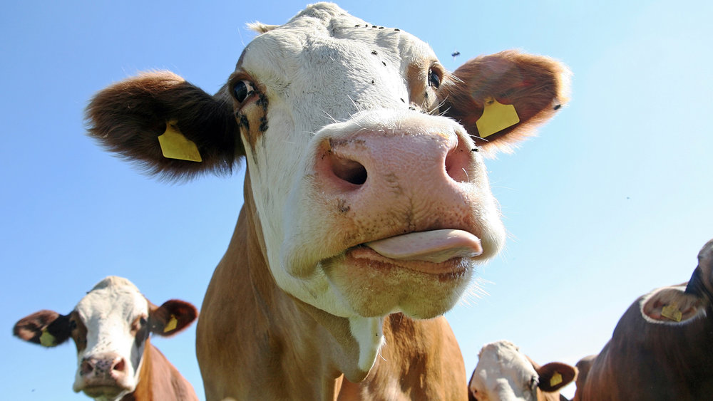 Dairy-blog.jpg