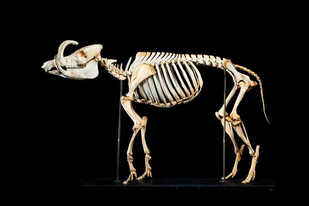 Skeletal Treasures