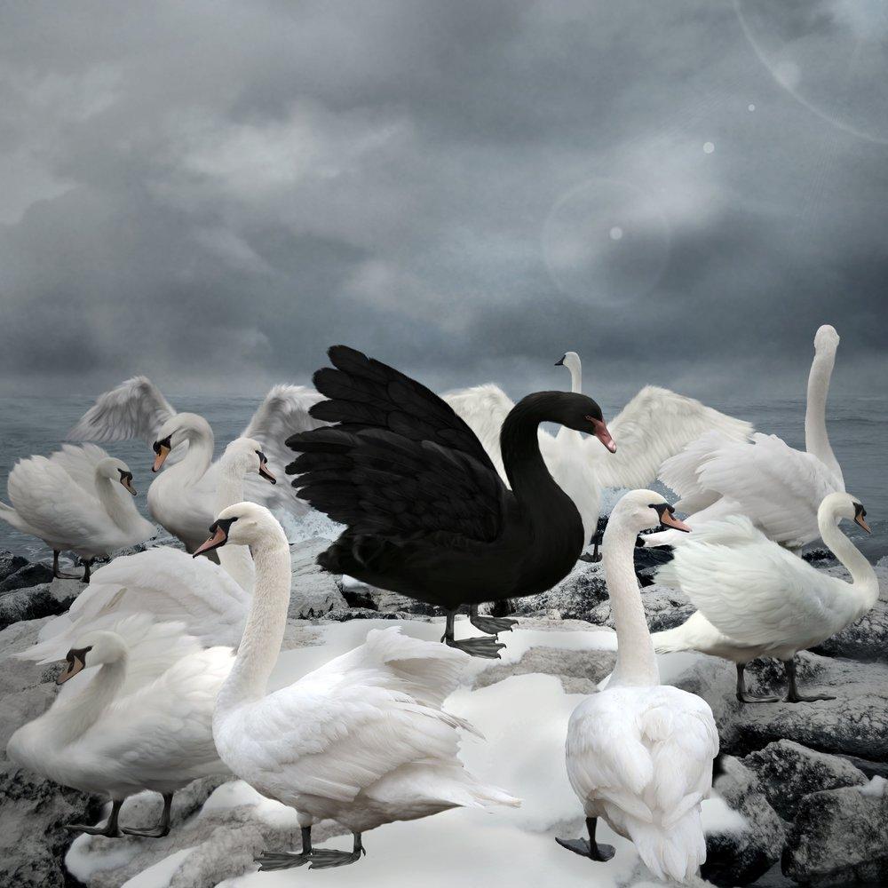 Black Swan_2.jpg