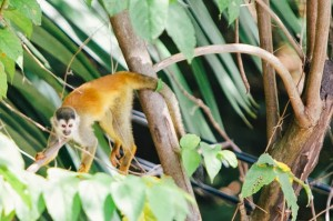 There were monkeys everywhere at this Costa Rica destination wedding!