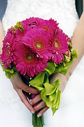 Bouquet of pink gerbera daisies
