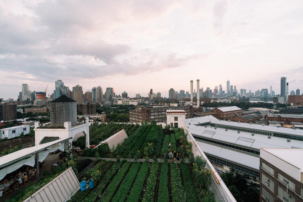 Image © Dane Issac, Brooklyn Grange Rooftop Farm