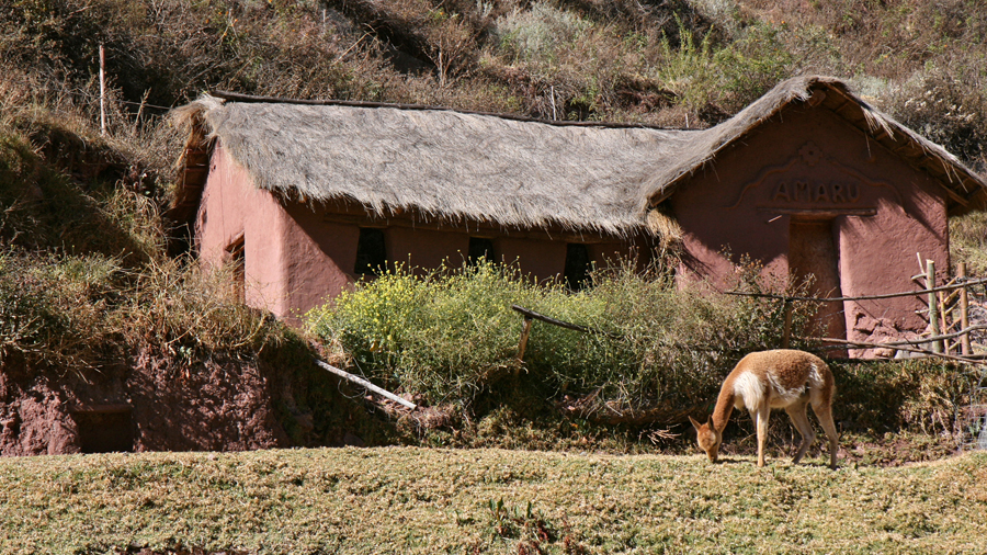 Expand Your Knowledge at Awana Kancha Cameloid Centre - Watch how llama, alpaca and vicuña fibres are treated and used in traditional Peruvian textiles and learn the amazing history of their use (plus see the animals too!).