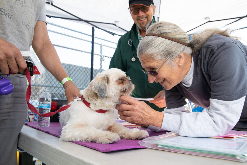 """Anne Norton, Volunteer - Our Vet tech superstar, Anne says """"These pets are so well socialized and loved."""" Anne reports fond memories of her first volunteer experience with Vet SOS, saying """"It was Thanksgiving in Golden Gate Park and we all ate turkey out of one of the veterinarian's trunks."""" Anne says she wants to volunteer with Vet SOS forever and become the """"oldest volunteer standing."""" Anne shows her puppy love towards """"Biscuit"""" (here)."""