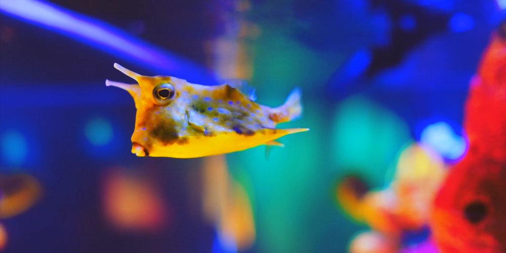 boxfish1.jpg