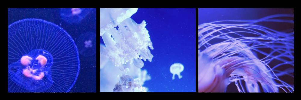 underwater_pink-03.png