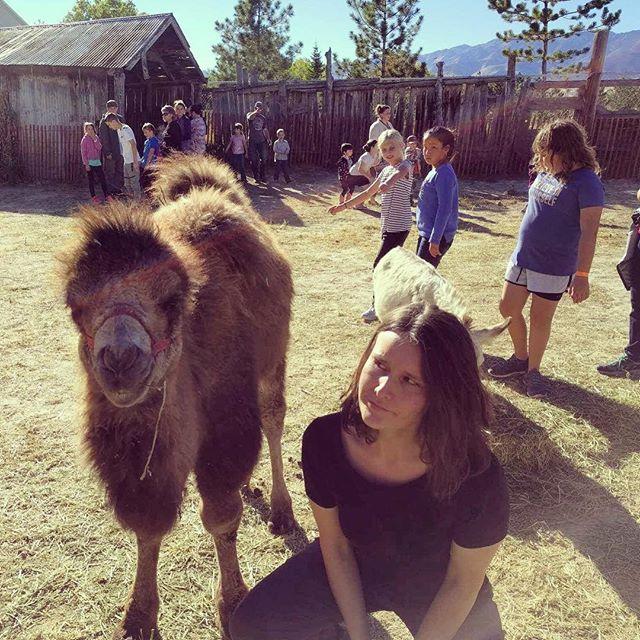 Went to a honey harvest, found a camel.