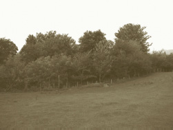walnut-wood-01.jpg