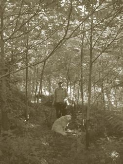 walnut-plantation.jpg