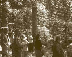 oak-ash-alder-forest.jpg