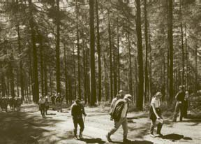 Members walking through the Leighton Estate woodlands
