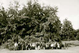 The Farnley Beech dwarfing our members.