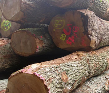 SELLING HARDWOOD TREES
