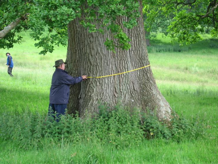 free-growth-oak-large-image.jpg