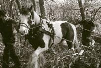 horse-logging.jpg