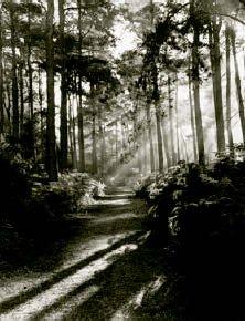 hill-rowland-01.jpg