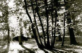 hill-rowland-02.jpg