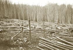 timber-stacks.jpg