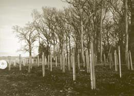 A Suffolk woodland project