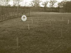 essex-planting-project-02.jpg