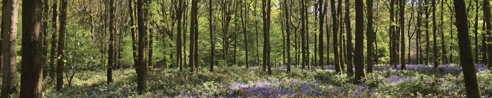 Join us today - and discover the benefits of being part of Woodland Heritage